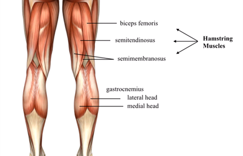 Blog Proximal Hamstring Tendinopathy